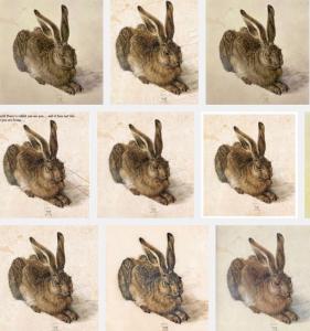 ideas are like rabbits